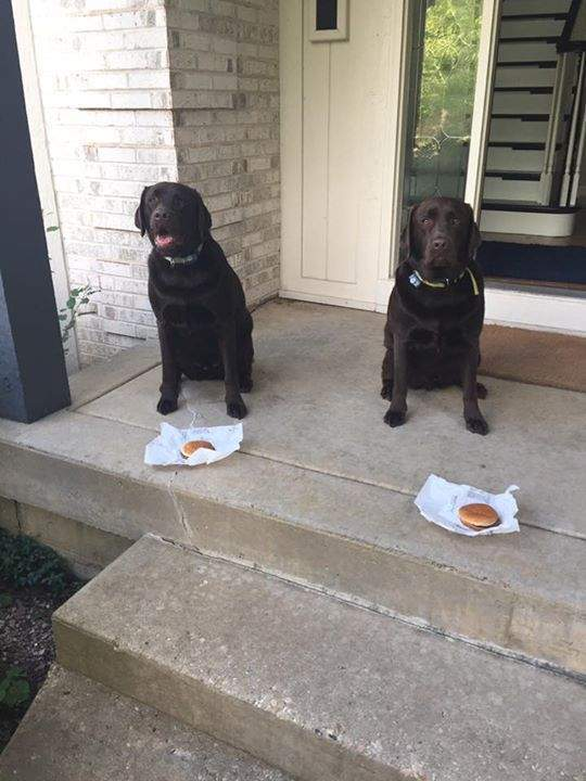 Wishing all of their litter mates a Happy 3rd birthday all the way from the USA!!   Love, Reno and Wright