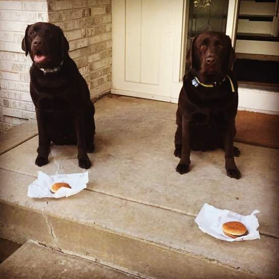 Awesome photo of Patonga Pups, just turned 3 and living in the USA.  Thanks Leslie for their birthday picture!  #3rdbirthday #welltraineddogs