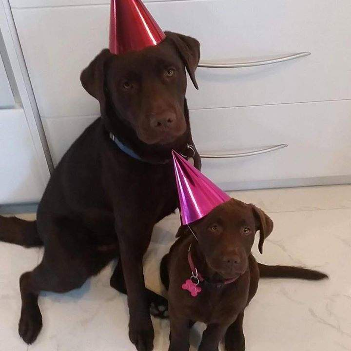 Darby's first B-Day with his little sister Indy #Birthdayspirit #perfectlifestyle #awesomeowners