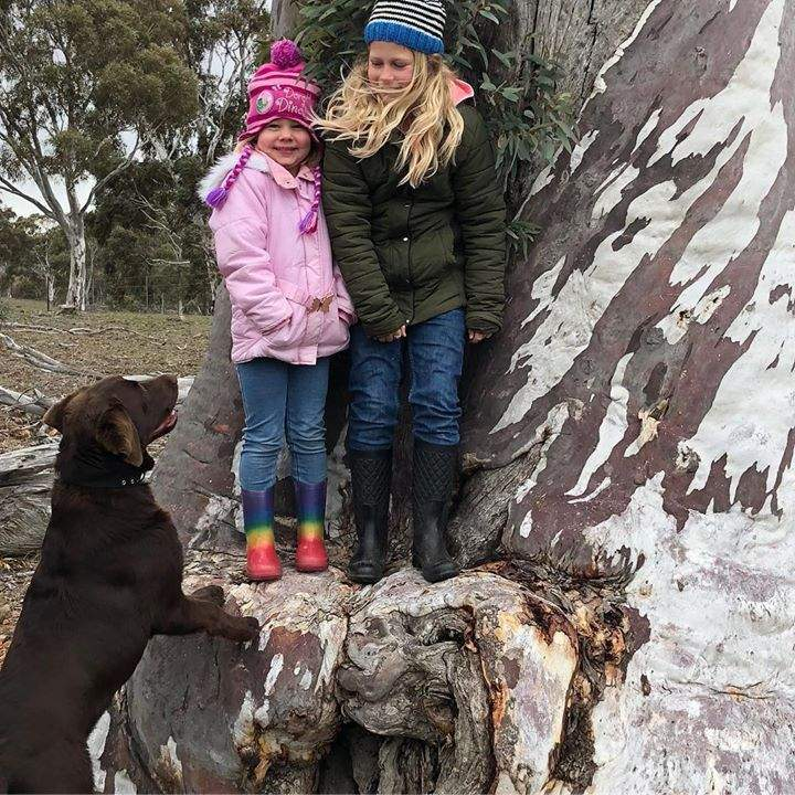 Miko 10 months later with his beautiful family #holidayfun #winter #labrador