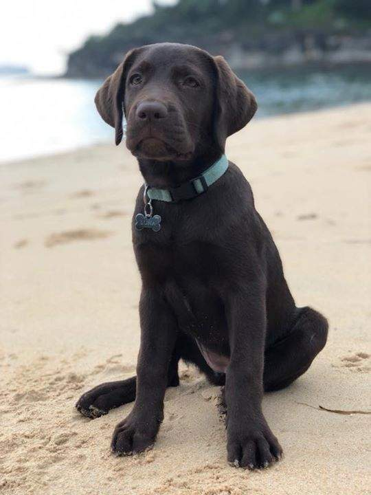 Luna (14 weeks) loving the beach.