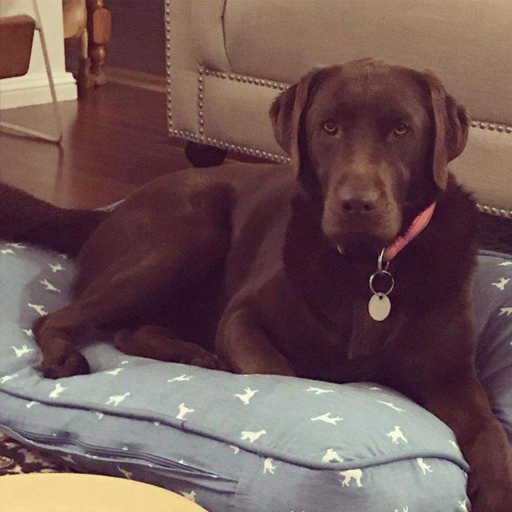 'Our beautiful Frankie turned 2 last week! She is so loved.'  #messagesoflove #beautifulfamily #happylabrador